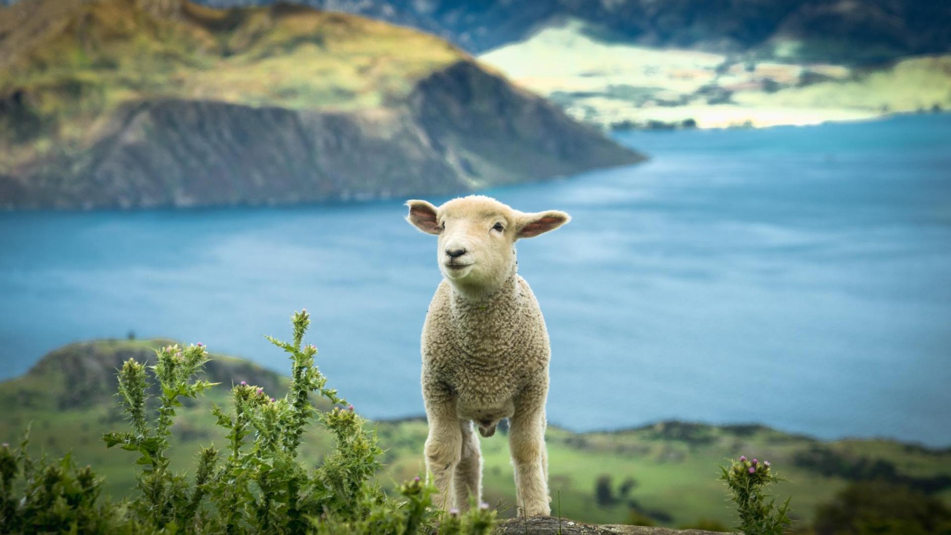 New Zealand Internship Program Hosted by Bright Internships